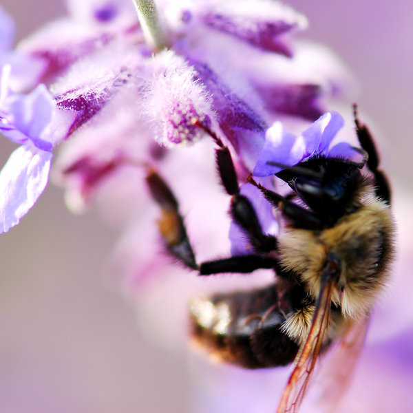 Bee 3: Bee on a flower