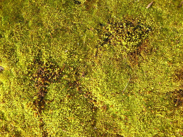 Moss texture: A wet plants texture.