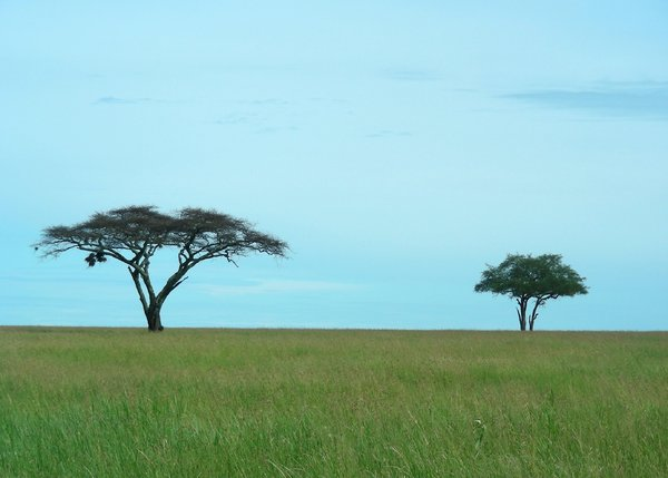 two trees: photo taken in Tanzania