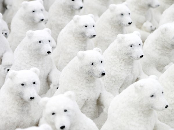 Ice bear group: ice bear decoration group