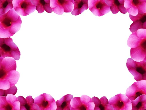 Floral Border 8: Floral border on blank page. Lots of copyspace.