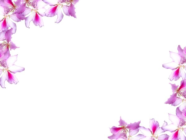 Floral Border 10: Floral border on blank page. Lots of copyspace. Not ...