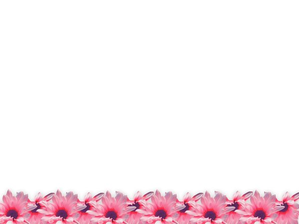 Floral Border 24: Floral border on blank page. Lots of copyspace. Must be seen in the large size to appreciate.