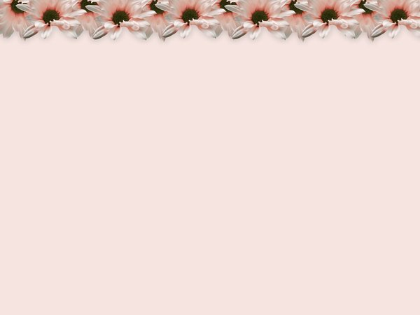 Floral Border 20: Floral border on blank page. Lots of copyspace.