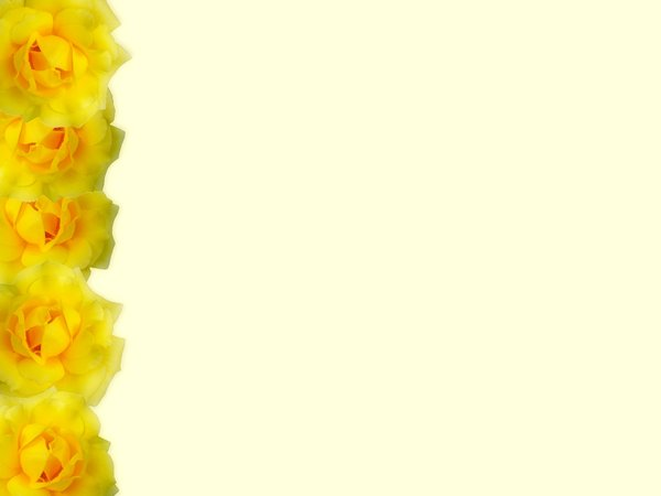 Floral Border  25: Floral border of yellow roses on blank page. Lots of copyspace.
