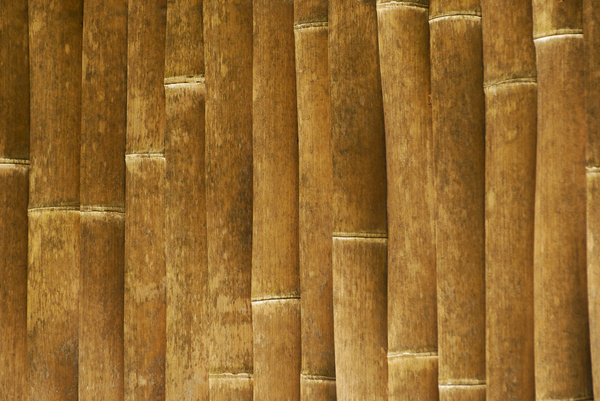 Bamboo wall: texture of bamboo