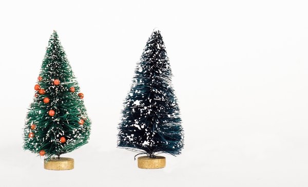Pine trees: two small pine trees for Christmas