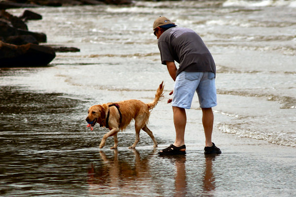 Man and his dog: Playing on the bay