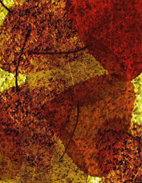 Basho Leaves 5: Variations of a Basho Texture with Leaves.Please visit my stockxpert gallery:http://www.stockxpert.com ..