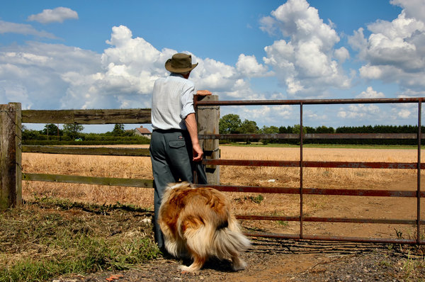 Farmer and dog: A farmer walking his dog after harvest