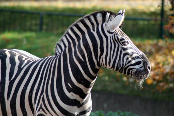 Zebra 1: Looking forward to feedback! Please credit if possible or drop me a line via http://www.jule.se