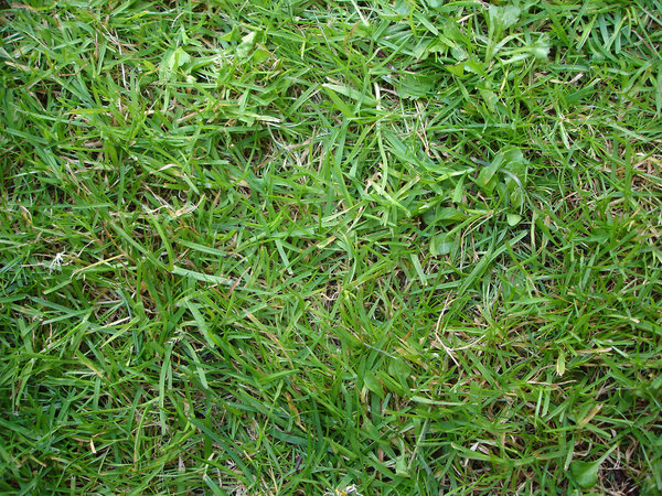 Grass: Image of grass for desktop or wallpaper.