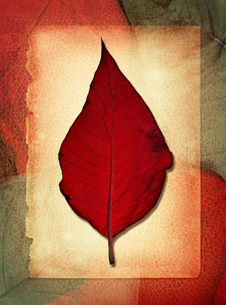 Leaf Collage: A vintage leaf collage.Please visit my gallery at:http://www.stockxpert.com ..