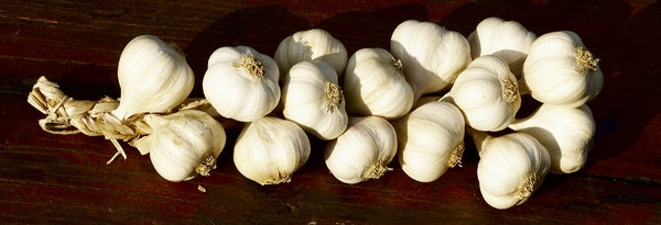 Garlic: a chain of garlic in a wooden table