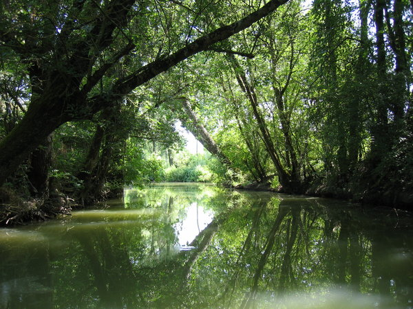 Marsh Marais Poitevin 1: The Marais Poitevin is one of the gratest marsh in France