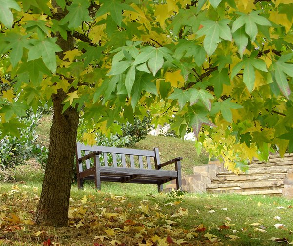 october bench: autumn