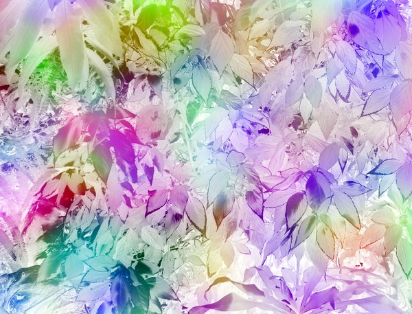 Leafy Textures 16 : Leaf shapes in rainbow coloured background. Pretty rainbow hues. Abstract image. Combination of photograph and graphics.