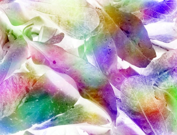 Leafy Textures 18: Leaf shapes in rainbow coloured background. Pretty rainbow hues. Abstract image. Combination of photograph and graphics. Great texture or fill.
