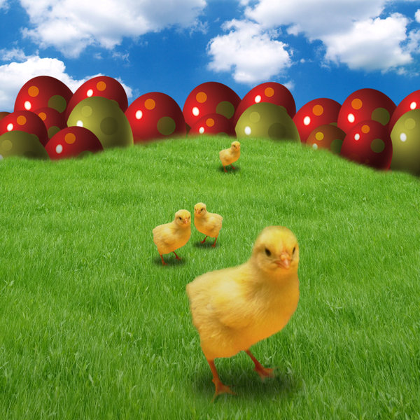 Easter design: Chick's on grass.