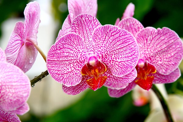 Orchid Season 4: Snapshots of beautiful orchids