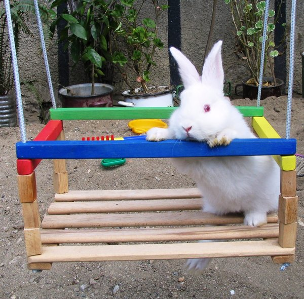 rabbit 1: rabbits in the swing