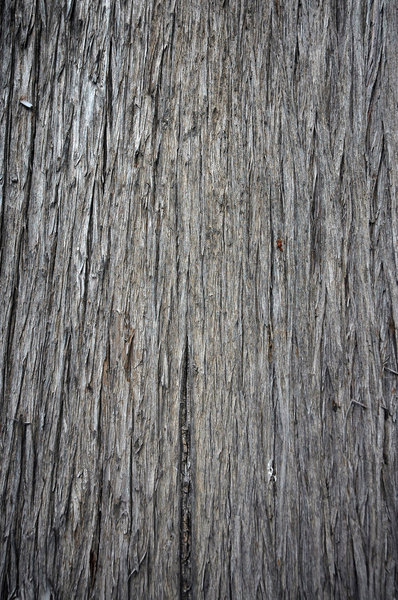 Bark 2: Tree bark texture or background shots.NB: Credit to read