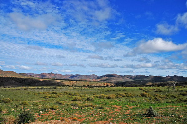 Bushveld: Typical Karoo bushveld, South Africa.NB: Credit to read