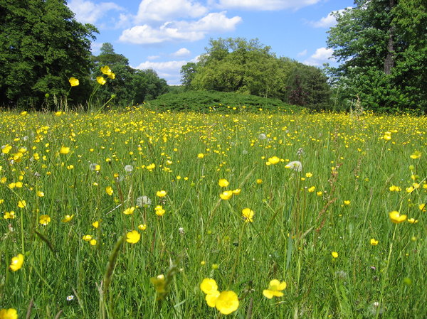 wild flower meadow: The Muskau Park is the biggest and one of the most famous English-style parks of Germany and Poland. It cover 3.5 square kilometres of land in Poland and 2.1 in Germany. The park extends on both sides of the Lusatian Neisse river.