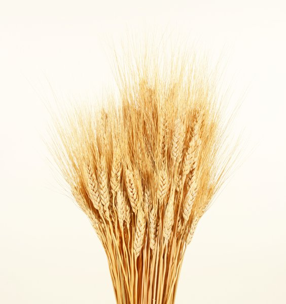 Wheat Bundle: A bundle of wheat.