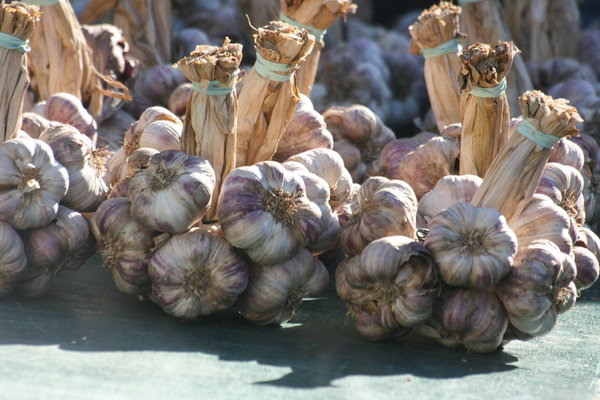 Garlic at the Market: fresh Garlic