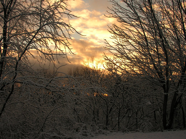 Winter Morning: Fresh snow on an early morning.