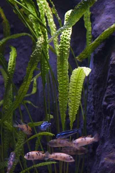aquarium with bright leafs: aquarium in the zoo in P&Atilde;&copy;cs