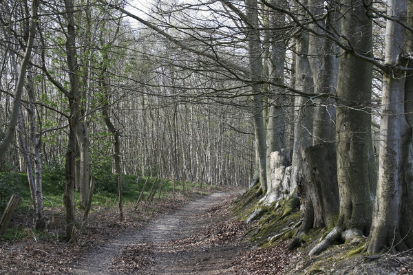 Into the forest: A forest path in West Sussex,England, in spring.