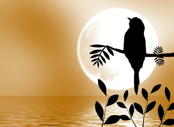 Bird Silhouette on Branch 1: A bird sitting on a branch silhouetted against the bright moon, with the moonlight reflected in water..
