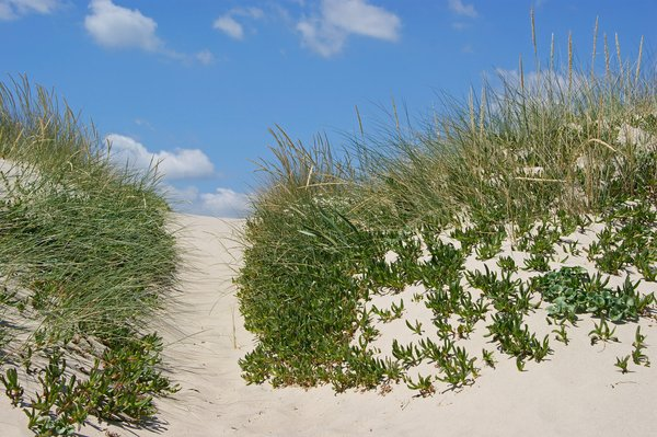 Dunes and plants: no description