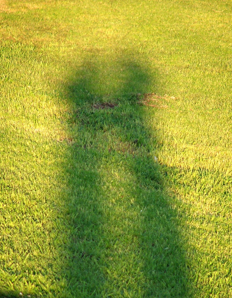 shadowy embrace: shadow of couple in grass background