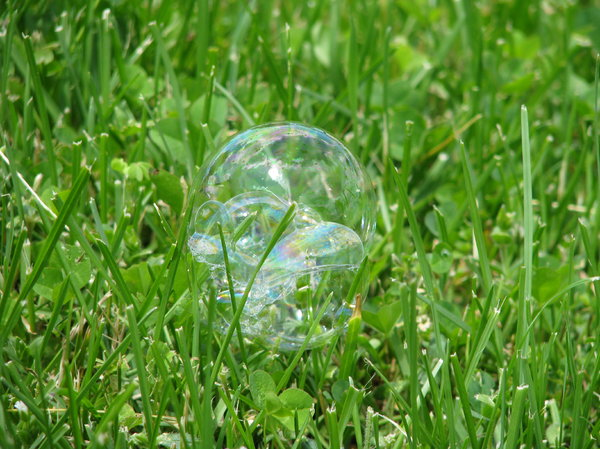 bubble: bubble on grass