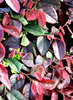 multicoloured foliage