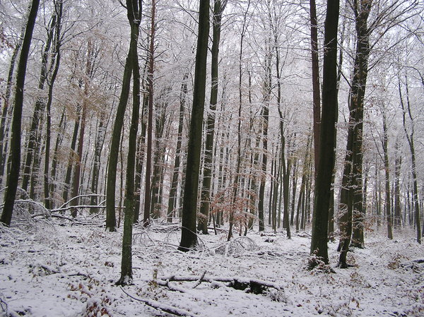 White world 3: a walk in the white forrest