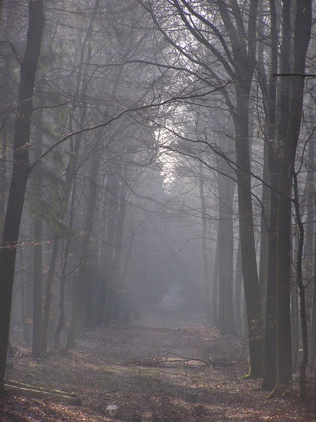 misty: forrest in fog