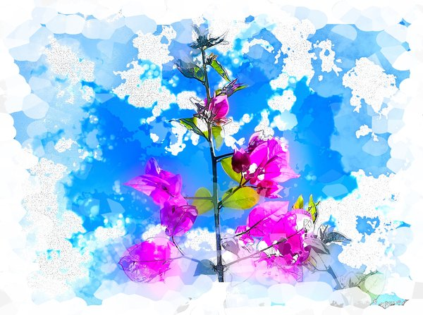 Springtime - Watercolour: A watercolour effect on a photo I took of a bouganvillea. This would look nice on a card, etc. RGB images are not to be used on cards, calendars or any other canvas without permission of the copyright holder. Please read the terms of use prior to download