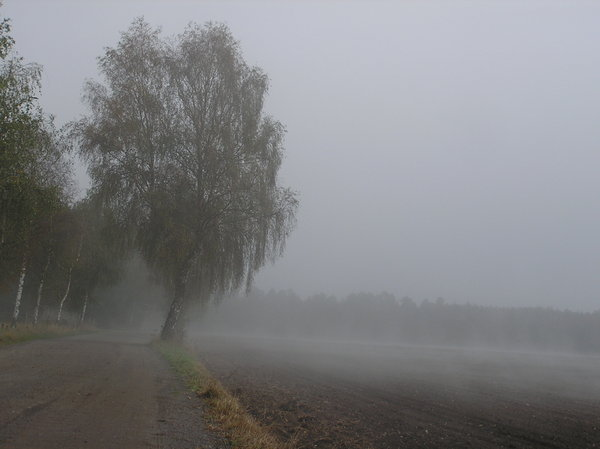 fog: in the morning...