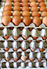 eggs-stack-ly