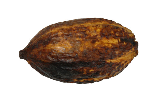 Cocoa pod: cocoa pod isolated on white background