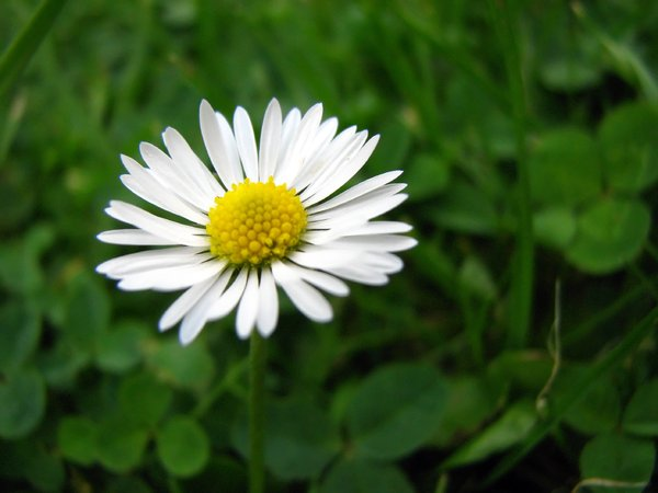 Day See: Daisys