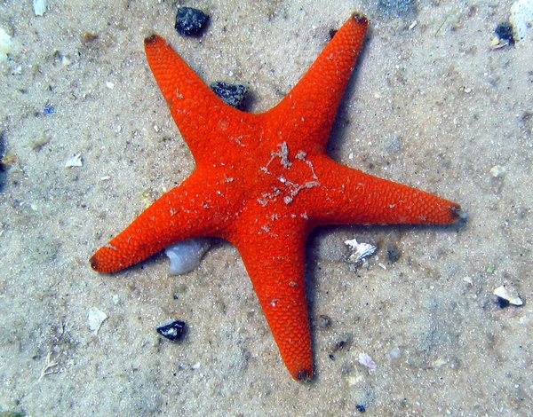 Starfish 1: A starfish from Simonstown South Africa.