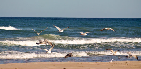 Seagulls: Seagulls on the beach