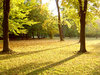 autumn park