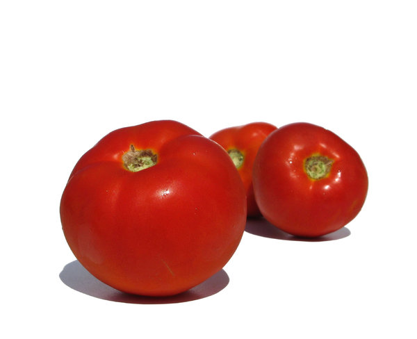 fresh tomatoes: none
