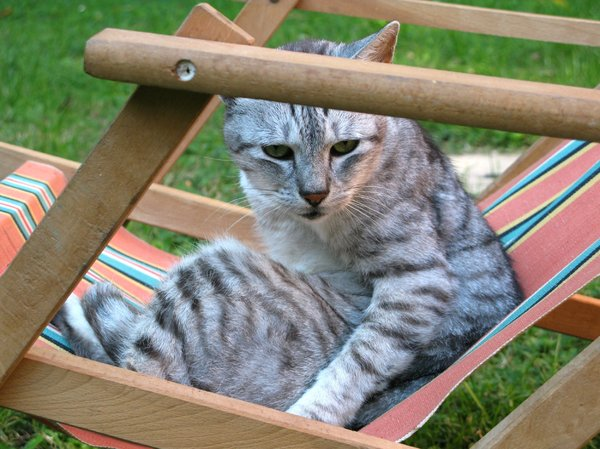 cat in deckchair: none